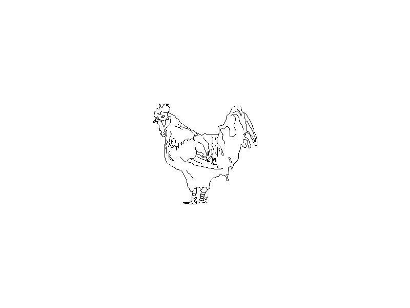Rooster Side View