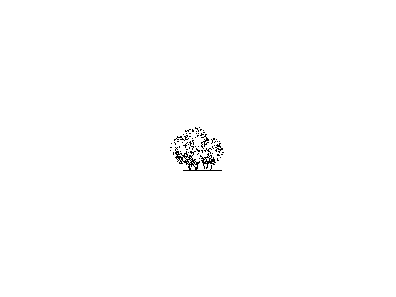 Tree in Elevation - Type 25